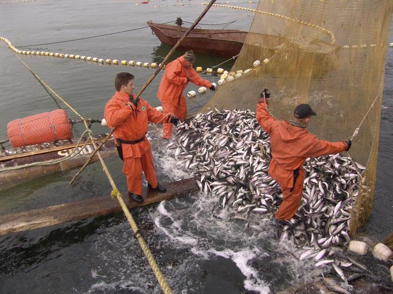 Вперше, в 2017 році генеральна комісія з питань рибальства в середземному морі фао (гкрс фао) реалізує в україні масштабний проект із наукових досліджень та технічної допомоги українській рибній