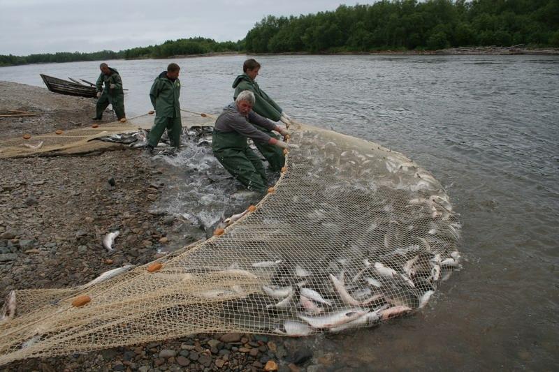 Определенный вес и размер добываемой рыбы.