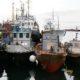 В Магаданской области предприятия рыбной отрасли увеличили вылов рыбы на 10 %