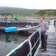 Объем производства аквакультуры в России за 9 месяцев вырос на 6 %