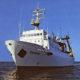 На глубинах Берингова моря увеличились запасы кальмаров