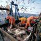 Рыбное хозяйство подготовят к новым правилам игры
