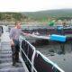 Возможности ТОР откроются аквакультуре